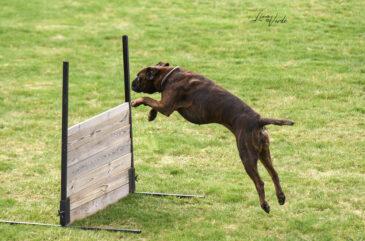 Boxer-hopp
