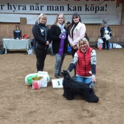 Vinnande Best In Show veteran