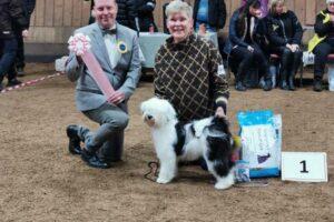 BIS Valp. 1. Kuai Le Gou's Grace at Steinhola. Tibetansk terrier. Ägare: Gunilla Albrigsten, Åkers Styckebruk