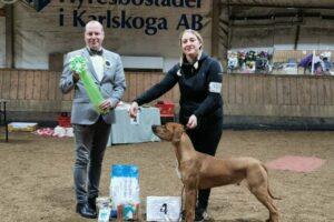 BIS Valp. 4. Kinyemi Proudly Presenting Paz Peqiin. Rhodesian Ridgeback. Ägare: Katrin Eriksson, Kumla