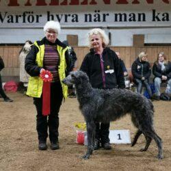 BIS Vuxen. 1. NJV 19 Anniehoods Call Me Greta. Skotsk hjorthund. Ägare: Marina Pettersson, Hagfors.